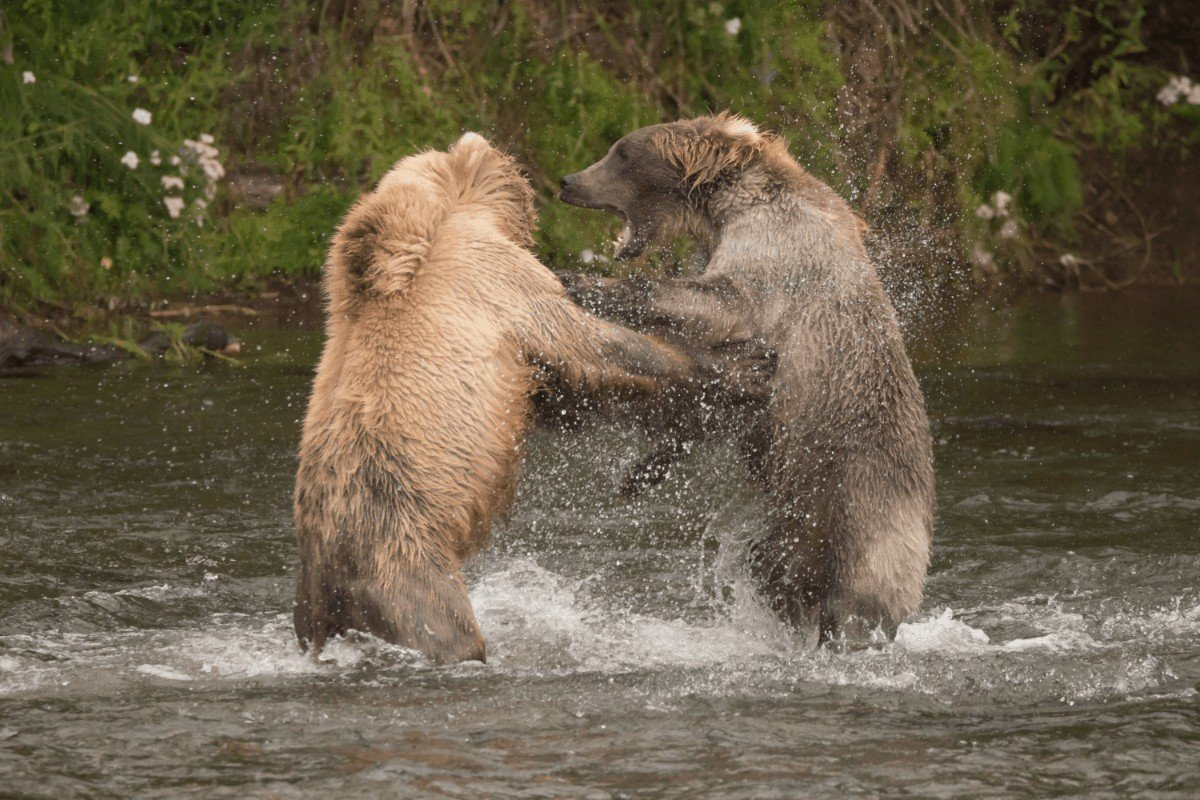 Choosing the best bear spray, how does bear spray work