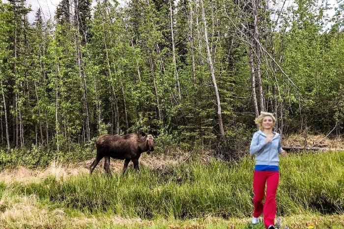 What To Do If You Encounter A Moose